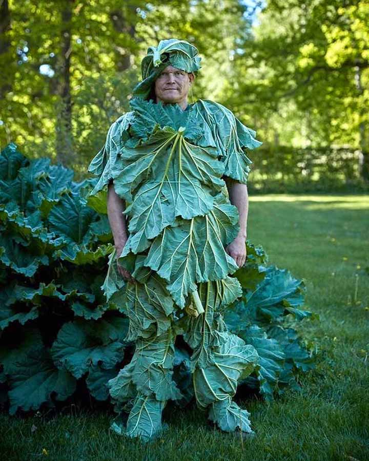 Am man wears a suit made from the leaves of a rhubarb plant.