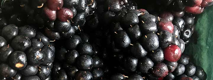 close up image of strawberries, blueberries and blackberries