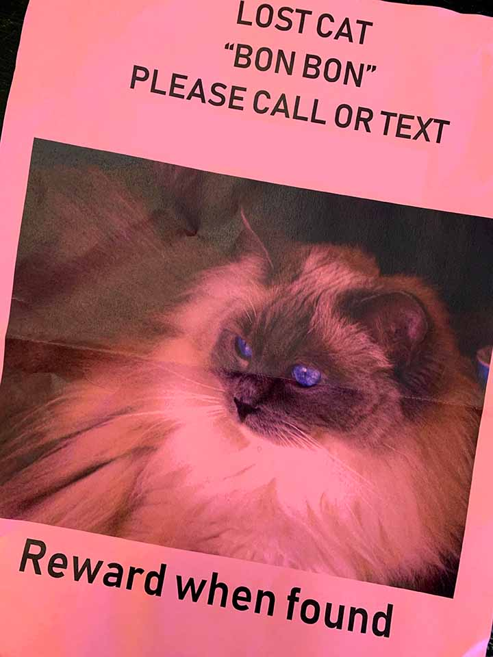 a missing cat flyer