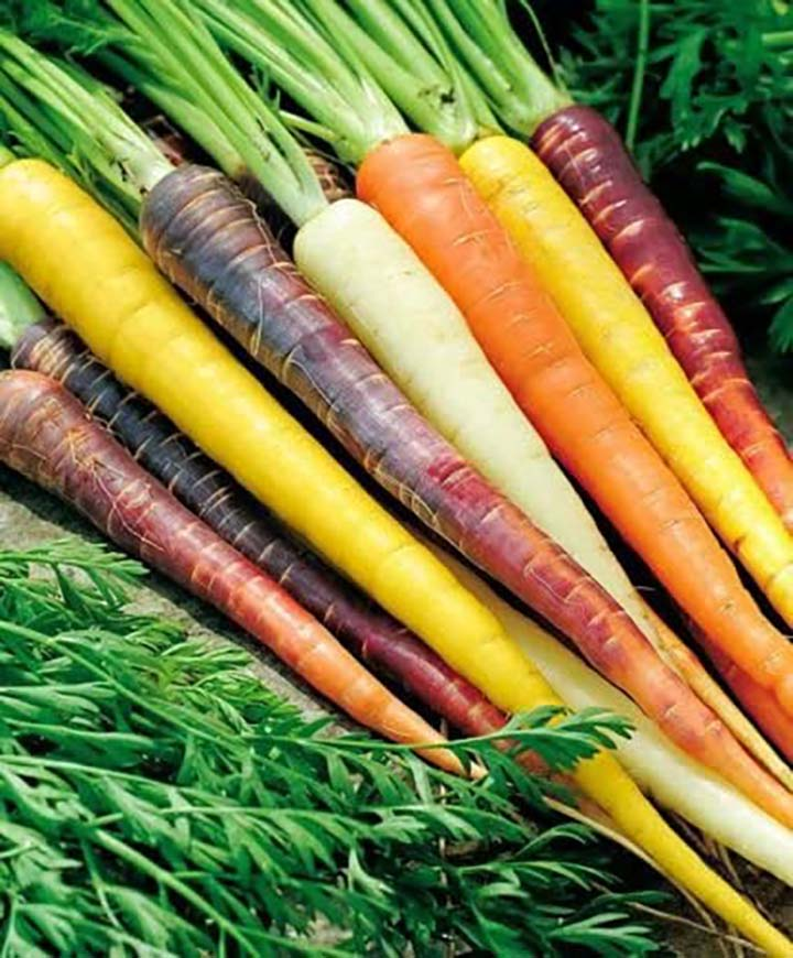 a bunch of multicolored carrots
